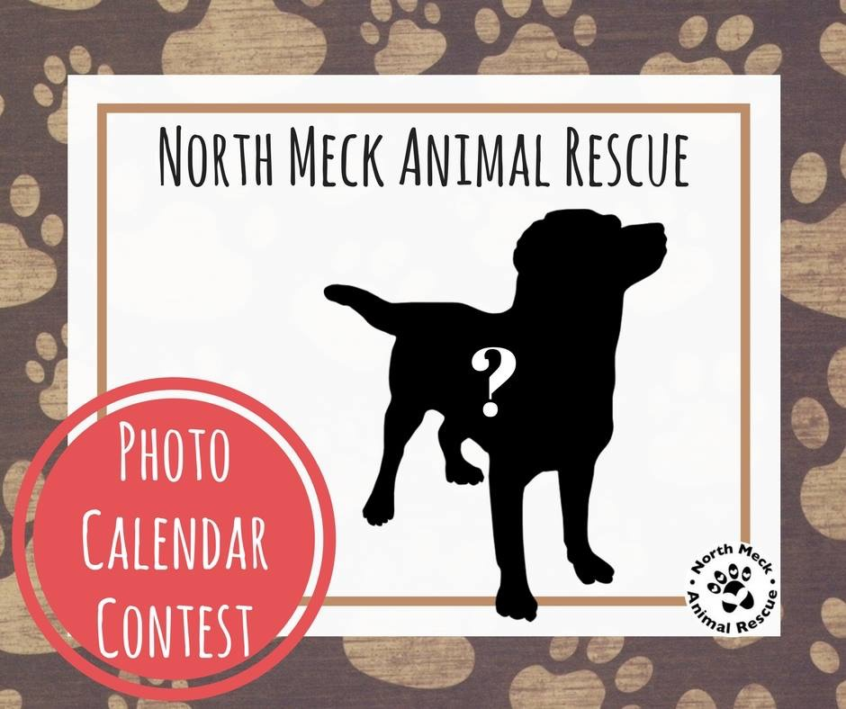 Calendar Photography Contest : Spring newsletter north meck animal rescue