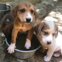 Bella's Puppies